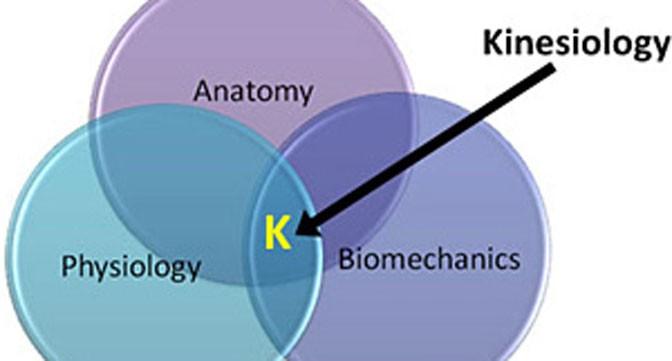 Blackheath Complementary Health Centre » Kinesiology