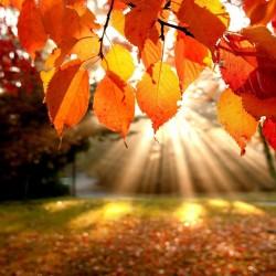 Hero autumn voucher