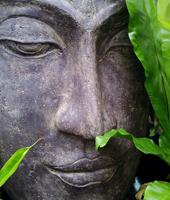 zen featured web